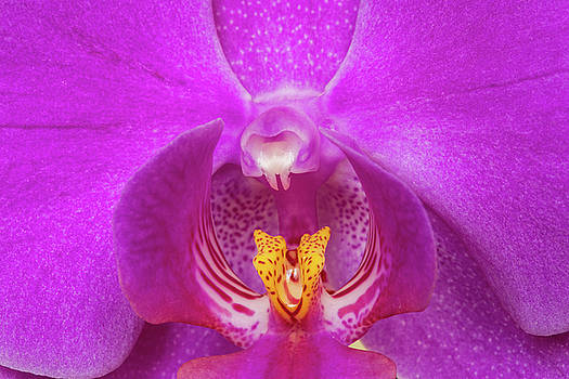 Mysterious Orchid with a drop by Yana Reint