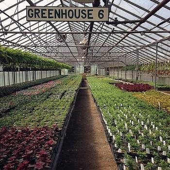 😍 Ok #wedgewoodgardens #greenhouse by Stephanie Tomlinson