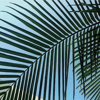 🌴 #palm Magic 🌴 #greenfriday by Heidi Lyons