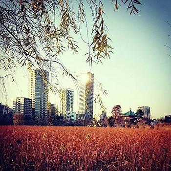 #不忍池  #park by Bow Sanpo