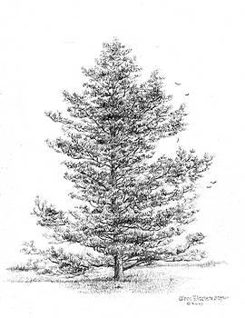 Jim Hubbard -  Pine