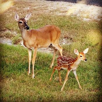 😍 Precious! #texashillcountry #mama by Sophia Perez