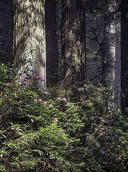 Jan Hagan -  Rhododendron and Redwoods