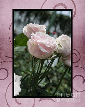 Roses for Charity by Tom Gari Gallery-Three-Photography