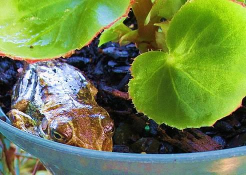 Secret Frog In Begonia Pot by Trudy Brodkin Storace