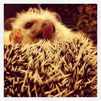 😋 #slimstagram #hedgehog by Emily Botelho