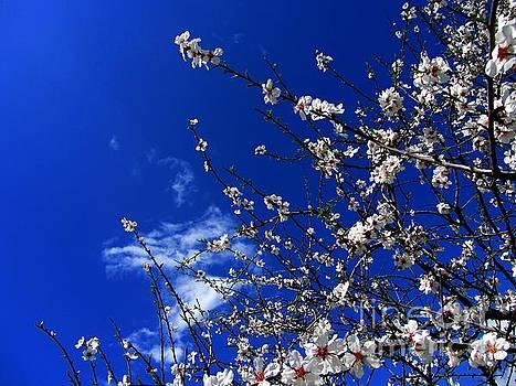 '' Spring 11 '' by Vassilis Tagoudis