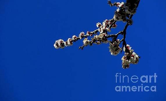 '' Spring 12 '' by Vassilis Tagoudis