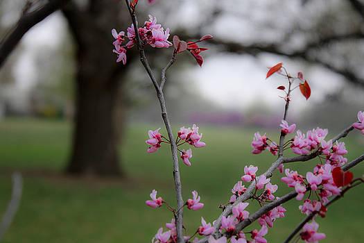Spring  by Barbara Dean