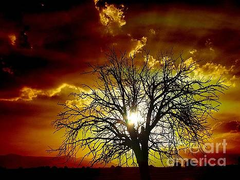 '' Sunset tree ''  by Vassilis Tagoudis