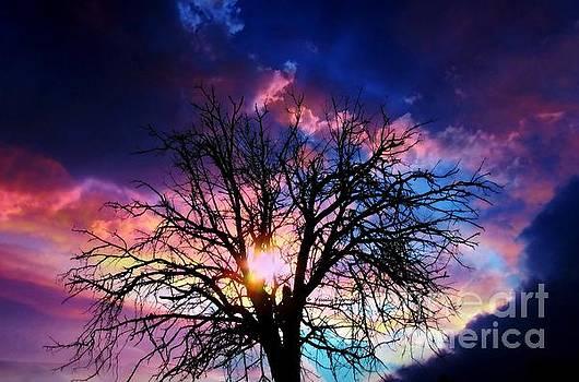 '' Sunset tree 2 ''  by Vassilis Tagoudis