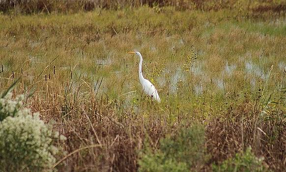 The Egret And The Fall by Valia Bradshaw