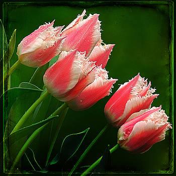 Ingrid Smith-Johnsen -  Tulip 31