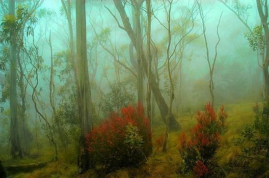 Wall Art -Mystic Forest by Darren Kearney