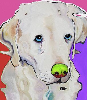 0029 Dog by Nixo by Nicholas Nixo