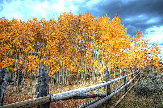 Autumn Fenced by John Foote