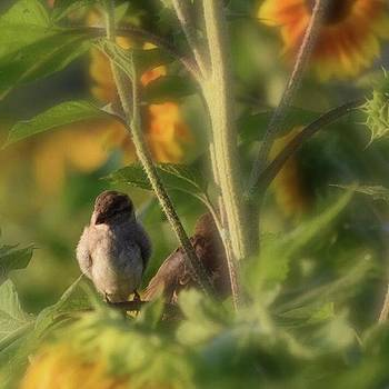08-31-18 - - - little Brown Bird by Mel Porter