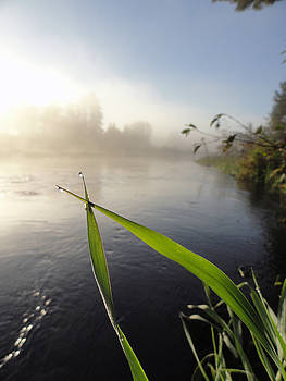 Sue Duda - 0h Morning Mist 1