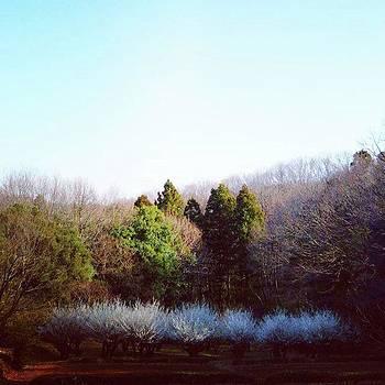 #桜 #お山 #自然 #樹々 #山 by Bow Sanpo