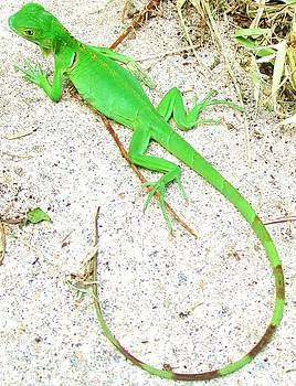Bright Green Baby Iguana by Trudy Brodkin Storace
