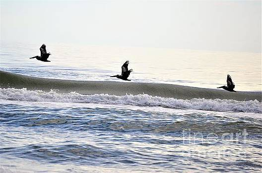 3 Pelicans by Brigitte Emme