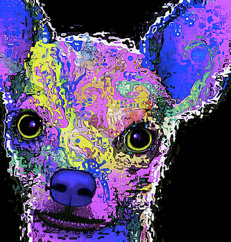 57 Chihuahua by Nixo by Nicholas Nixo