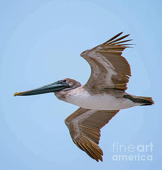 A Bird's Eye View by Debbie Morris