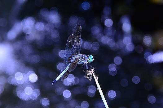 Raymond Salani III - A Dragonfly