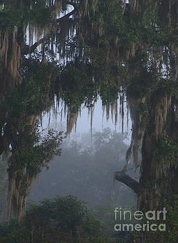 A Foggy Morning by Lynn Jackson