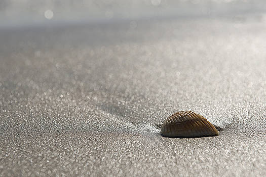 A Lone Shell on the Beach by Steve Shockley
