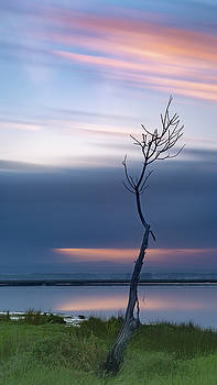 A tree  by Bruno Rosa