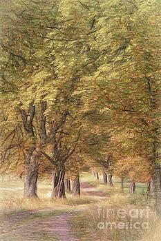 A walk in the countryside by Howard Ferrier