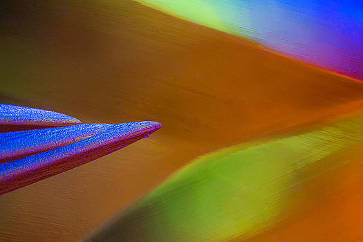 Edser Thomas - Abstract Macro