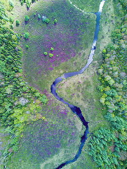 Birds-eye View Aerial of River and Meadow with Rhododendrons by Scott Leslie