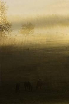 Aeris  by Kevin Blackburn