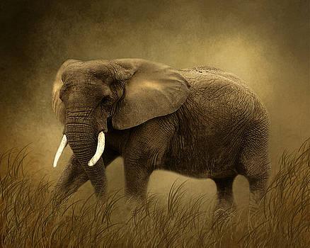 African Elephant by TnBackroadsPhotos