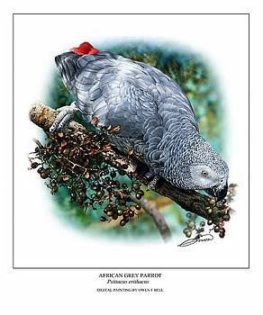 African Grey Parrot by Owen Bell