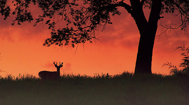 After the sunset by Rima Biswas