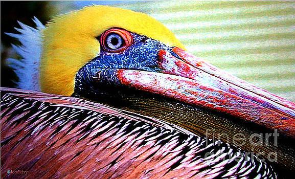 Albatross King by John Mabry