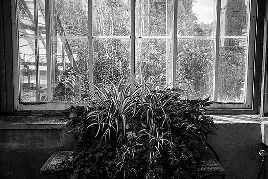 Allan Gardens by Ross Henton