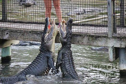 Paulette Thomas - Alligators