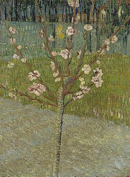 Almond Tree in Blossom Arles, April 1888 Vincent van Gogh 1853 - 1890 by Artistic Panda