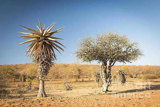 Tim Hester - Aloe Vera Trees Botswana Africa