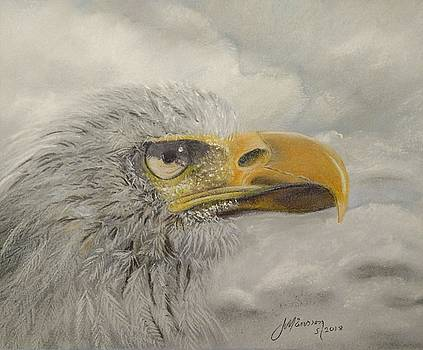American Bald Eagle by Joan Mansson