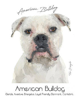 American Bulldog Poster by Tim Wemple