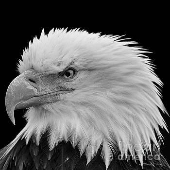 American Fierce by Diane E Berry