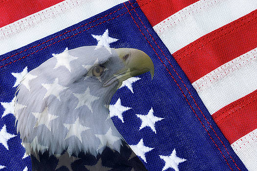 Jill Lang - American Flag and Bald Eagle