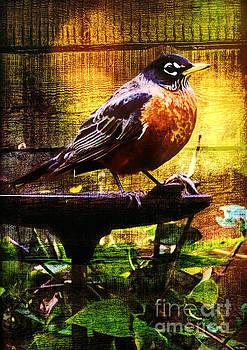 American Robin by Tina LeCour