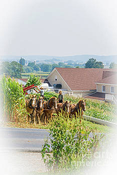 Patricia Hofmeester - Amish farmer and son