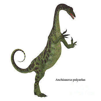 Anchisaurus Dinosaur on White by Corey Ford